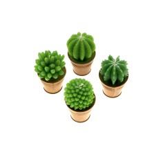 Cactus in vasetto (4 decori assortiti)