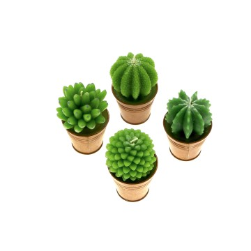 Cactus in vasetto (4 decori assortiti)